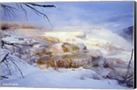 Mammoth Hot Springs - Yellowstone Fine-Art Print