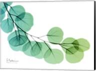 Eucalyptus Green Blue Fine-Art Print