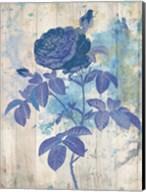 My Blue Rose Fine-Art Print