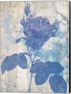 Blue Rose In My Garden Fine-Art Print