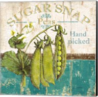 Sugar Snap Fine-Art Print