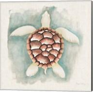 Coastal Mist Sea Turtle Fine-Art Print