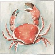 Coastal Mist Crab Fine-Art Print