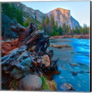 Tree roots in Merced River in the Yosemite Valley Fine-Art Print
