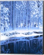 Winter, Conifers, Merced River, Yosemite Valley CA Fine-Art Print