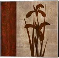 Wine Iris 1 Fine-Art Print