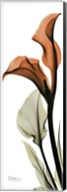 Terracotta Calla Lily Fine-Art Print
