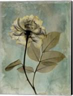 Rose 5 Fine-Art Print