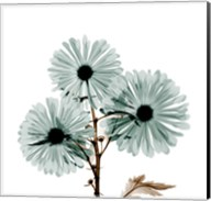Chrysanthemum Love Fine-Art Print