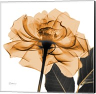 Copper Rose Black Leaves Fine-Art Print