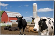 Cows, red barn, silo, farm, Wisconsin Fine-Art Print