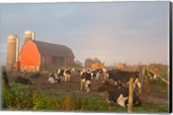 Holstein dairy cows outside a barn, Boyd, Wisconsin Fine-Art Print