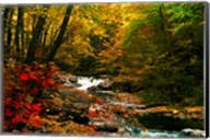 Mountain Stream Fine-Art Print