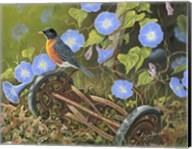 American Robin Fine-Art Print