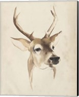 Watercolor Animal Study IV Fine-Art Print