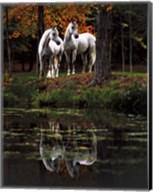 Autumn's Reflection Fine-Art Print