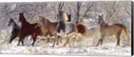 Snow Stampede Fine-Art Print