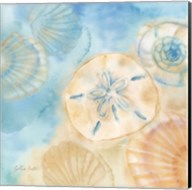 Watercolor Shells III Fine-Art Print