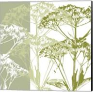 Delicate Greens Fine-Art Print