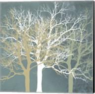 Tranquil Trees Fine-Art Print