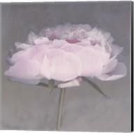 Jolie Fine-Art Print