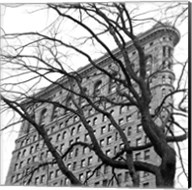 Flatiron with Tree (b/w) (detail) Fine-Art Print