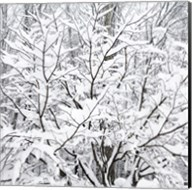 Snow Filled Branches Fine-Art Print