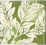 Sage Foliage Fine-Art Print