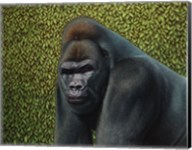 Gorilla With A Hedge Fine-Art Print