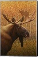 Moose Fine-Art Print