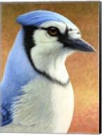 Blue Jay Fine-Art Print