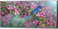 Garden Sapphire - Bluebird Fine-Art Print