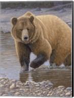 Shore Patrol - Grizzly Fine-Art Print