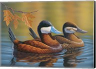 Stiff Tails Ruddy Ducks Fine-Art Print