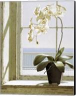 Flower In Window Fine-Art Print