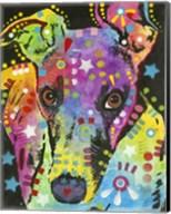 Curious Greyhound Fine-Art Print