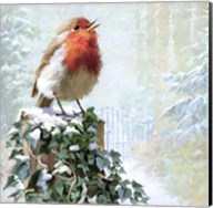 Robin On Ivy Fine-Art Print