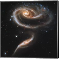"""A """"""""Rose"""""""" Made of Galaxies Highlights Hubble's 21st Anniversary Fine-Art Print"""