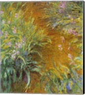 The Path through the Irises Fine-Art Print