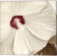 Alabaster Hibiscus Fine-Art Print
