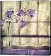 Window Orchids Fine-Art Print