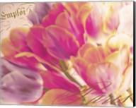 Tulip Glow Fine-Art Print