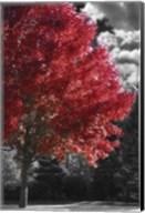 New England Autumn II Fine-Art Print