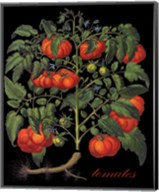 Tomates Fine-Art Print