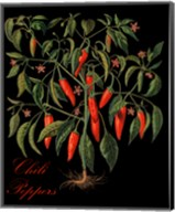 Chili Peppers Fine-Art Print