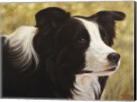 Border Collie 3 Fine-Art Print
