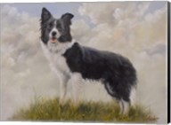 Border Collie 13 Fine-Art Print