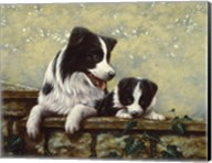 Border Collie 15 Fine-Art Print