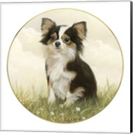 Chihuahua in Field Fine-Art Print