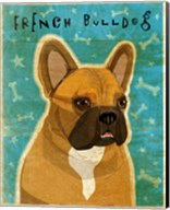 French Bulldog Fawn & White Fine-Art Print